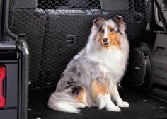 Divisor para perros para asiento trasero